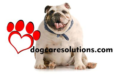 dogcaresolutions